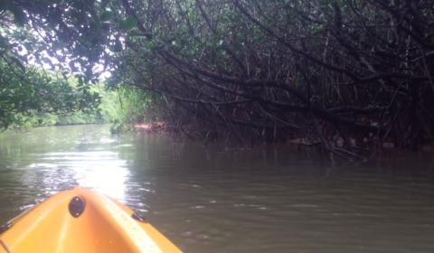 Mangrove Kayaking in Ishigaki