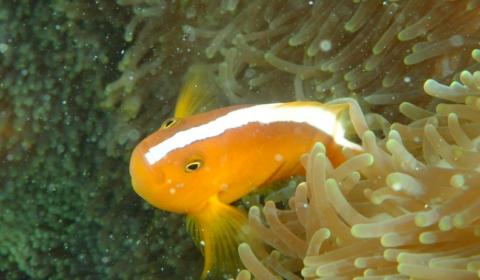 Tropical fish in Ishigaki